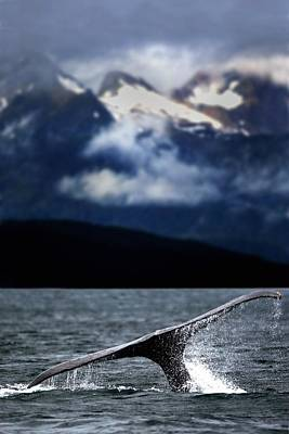Splash From Tail Of Humpback Whale Art Print by Richard Wear