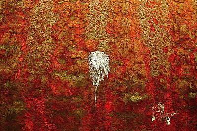 Photograph - Splat by Darren Cole Butcher