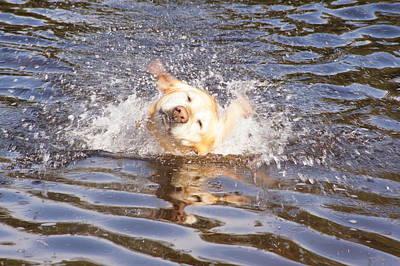 Photograph - Splish Splash by Angi Parks