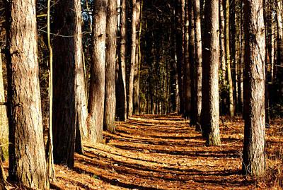 Striking Photograph - Spnc Tunnel Of Trees by LeeAnn McLaneGoetz McLaneGoetzStudioLLCcom
