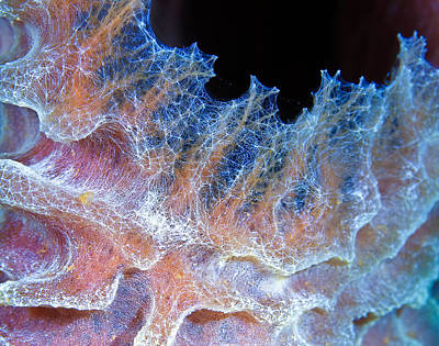 Photograph - Sponge Detail by Jean Noren
