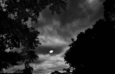 Photograph - Spooky Night by Shannon Harrington