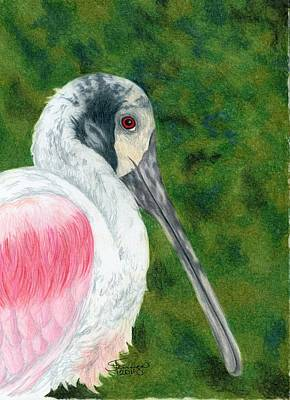 Spoonbill Mixed Media - Spoonbill by Brandy Fenenga