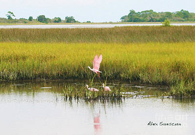 Spoonbill Drawing - Spoonbill Savannah by Alex Suescun