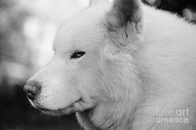 Photograph - Spot In Black And White by Lynda Dawson-Youngclaus