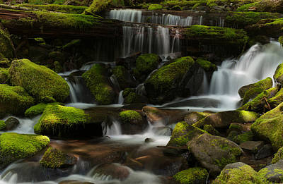 Olympic National Park Photograph - Spotlights by Mike Reid
