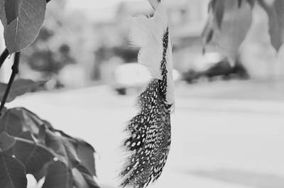 Photograph - Spotted Feather With The Pink Feather  In Black And White  by Puzzles Shum