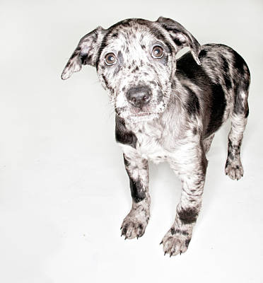 Spotted Puppy Art Print
