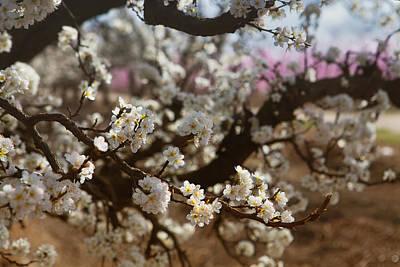 Photograph - Spring 0305 by Rich Berrett