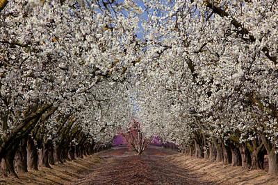 Photograph - Spring 0312 by Rich Berrett