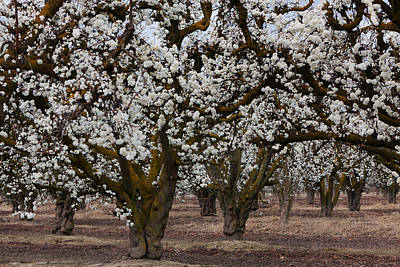 Photograph - Spring 0319 by Rich Berrett