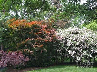 Photograph - Spring Abundance by Barbara Plattenburg