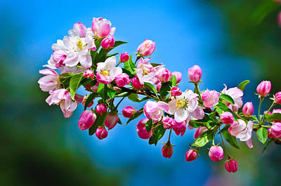 Photograph - Spring Awakening by Greg Norrell