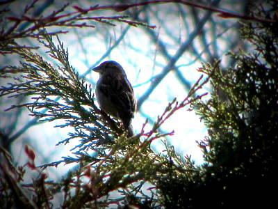 Photograph - Spring Bird by Anita Burgermeister