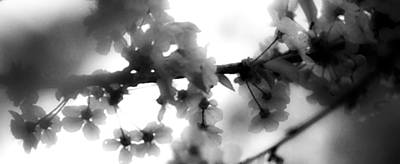 Photograph - Spring Blossom by Steven Loyd