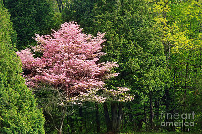 Spring Blossoms Art Print by HD Connelly