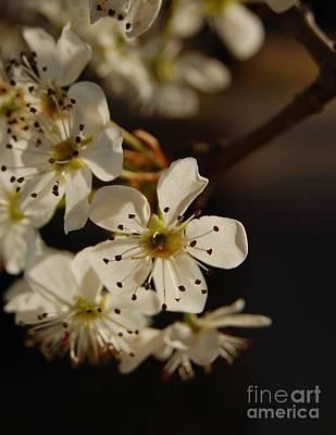Spring Blossoms I Art Print