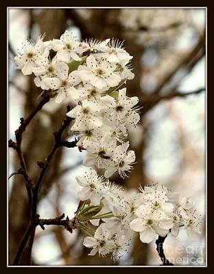 Spring Blossoms Art Print by Megan Wilson