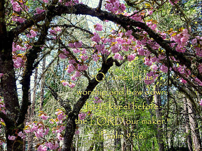 Spring Blossoms With Scripture Art Print by Cindy Wright