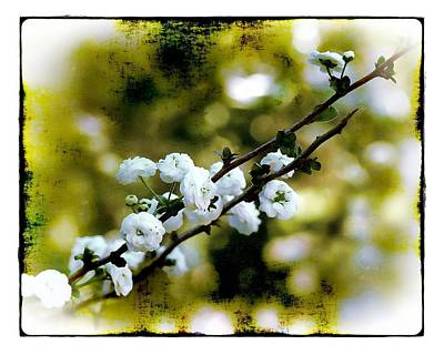 Photograph - Spring Bough by Judi Bagwell