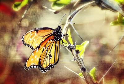 Spring Butterflies  Art Print
