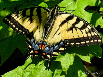 Photograph - Spring Butterfly by Debra     Vatalaro