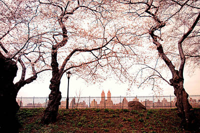 Spring Nyc Photograph - Spring Cherry Blossoms - Central Park Reservoir by Vivienne Gucwa