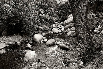 Photograph - Spring Creek II by Kathleen Grace