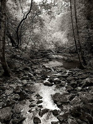 Photograph - Spring Creek IIi - Black And White by Kathleen Grace