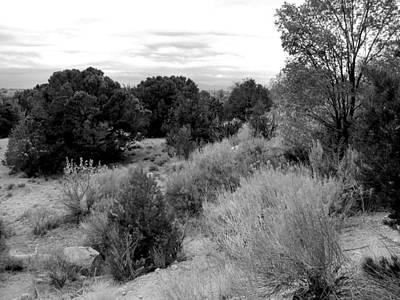 Photograph - Spring Desert Landscape - Black And White by Kathleen Grace