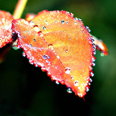 Photograph - Spring Dew by Michelle Joseph-Long