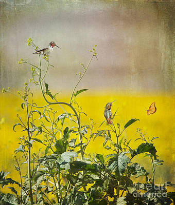Hummingbird Photograph - Spring Equinox by Susan Gary