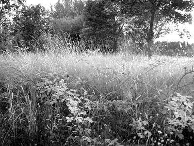Photograph - Spring Field Black And White by Kathleen Grace