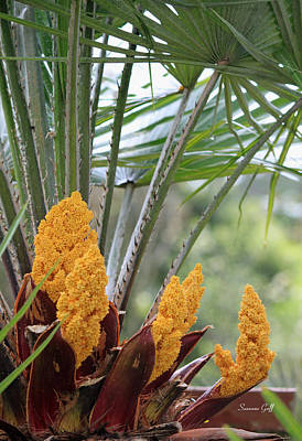 Palmetto Plants Photograph - Spring Fruit by Suzanne Gaff
