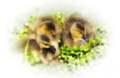 Gosling Painting - Spring Goslings by Elaine Manley