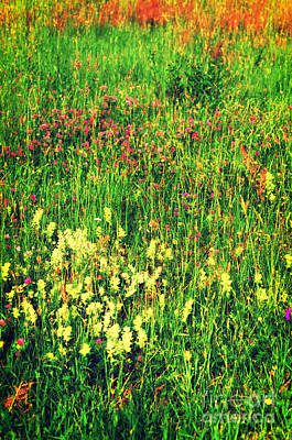 Photograph - Spring Grass by Silvia Ganora