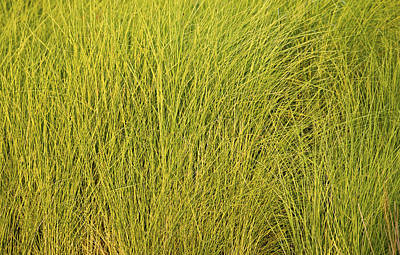 Photograph - Spring Grasses by Rich Franco
