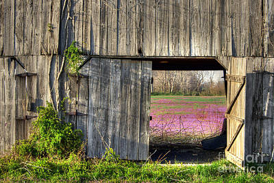 Vetch Photograph - Spring In Kentucky by Larry Braun
