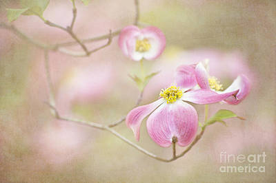 Art Print featuring the photograph Spring Inspiration by Cheryl Davis