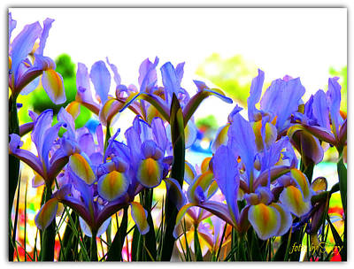 Photograph - Spring Iris by Terry Temple