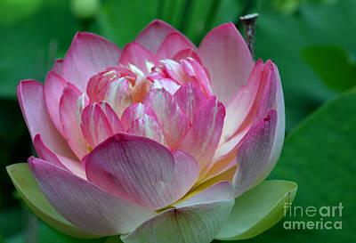 Spring Lotus-08 Art Print by Eva Thomas