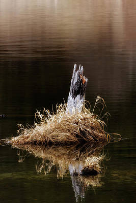 Photograph - Spring Marsh Stump by Albert Seger