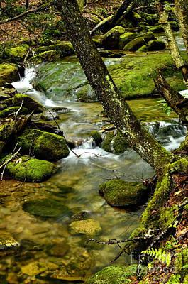 Garden Fruits - Spring Mountain Stream by Thomas R Fletcher