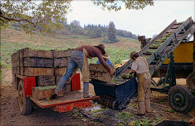 Photograph - Spring Mt. Grape Harvest-1 by Gary Rose