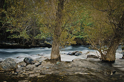 Photograph - Spring On Stony Creek by Sherri Meyer