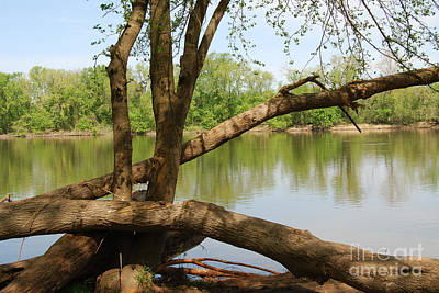Photograph - Spring On The Potomac by Eva Kaufman