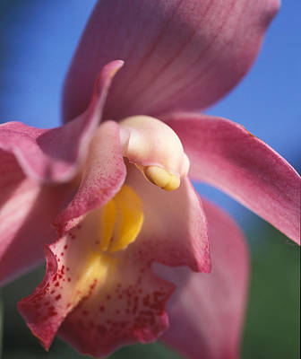 Spring Orchid Art Print by Kathy Yates