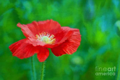 Spring Poppy Art Print by Darren Fisher