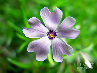 Art Print featuring the photograph Spring Purple by Thanh Tran