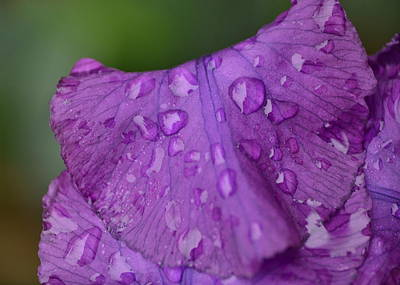 Photograph - Spring Rain In Purple by JD Grimes